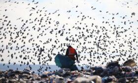 Власти Ленобласти выступили против переработки мусора под Гатчиной