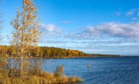Власти Карелии потребовали закрытия фирмы из-за выброса сточных вод в лес