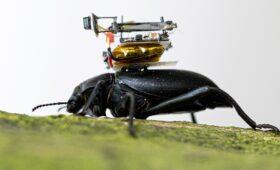 Искусственный нос и камера для жуков, что еще могут ученые?