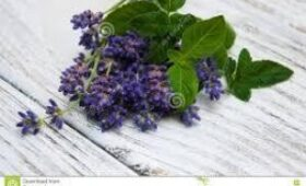 Лаванда и мята: названы ароматы, повышающие настроение