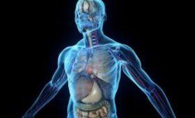 Микроорганы помогут в изучении воспалительных болезней