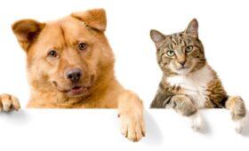 Дума согласилась расширить список используемых вветеринарии наркотических средств