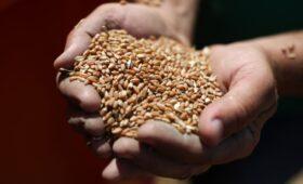 СМИ узнали об идее ввести предельные цены на зерно и макароны
