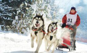 Занятия с собакой на новогодних праздниках