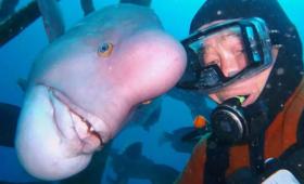 Японец уже 30 лет дружит с «человекоголовой» рыбой