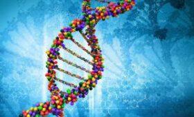 Ученый предложил сервис знакомств по ДНК: через смартфон, без генетических рисков