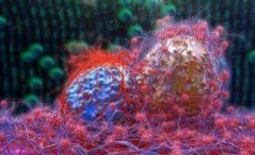 Ученые раскрыли механизм самоуничтожения раковых клеток