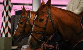 Всадника из США дисквалифицировали за использование электрошпор на лошадях