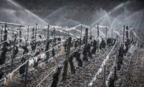 Франция выделит фермерам €1 млрд после «катастрофы XXI века» с виноградом