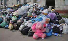 В РЭО измерили сортируемые в России отходы в слонах