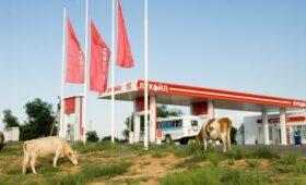 Федун назвал условие снижения цен на бензин в России до 20 руб. за литр