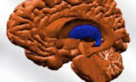 Стимуляция таламуса пробудила макак от наркоза