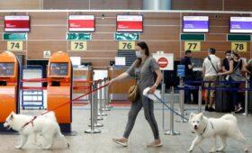 «Аэрофлот» начал начислять мили за перевозку животных