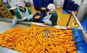 Глава «Белой Дачи» объяснил взлет цен на морковь»/>