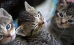 Ученые Уханьского института вирусологии выявили коронавирус у кошек