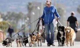Итальянские ученые заявили, что у собаководов снижен риск заболеть COVID-19